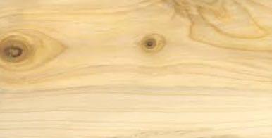 Parkett Aus Zypresse Eher Unbekannt. Schließlich Ist Dieser Nadelbaum, Der  Rund 25 Meter Hoch Wird Und Bis Zu 70 Zentimeter Im Stammdurchmesser Sein  Kann, ...